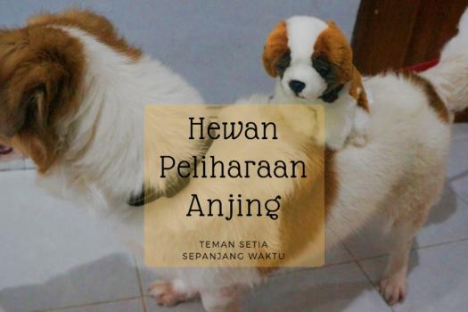 Hewan Peliharaan Anjing, Teman Setia Sepanjang Waktu